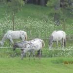 strider-an-mares1