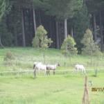 strider-an-mares3